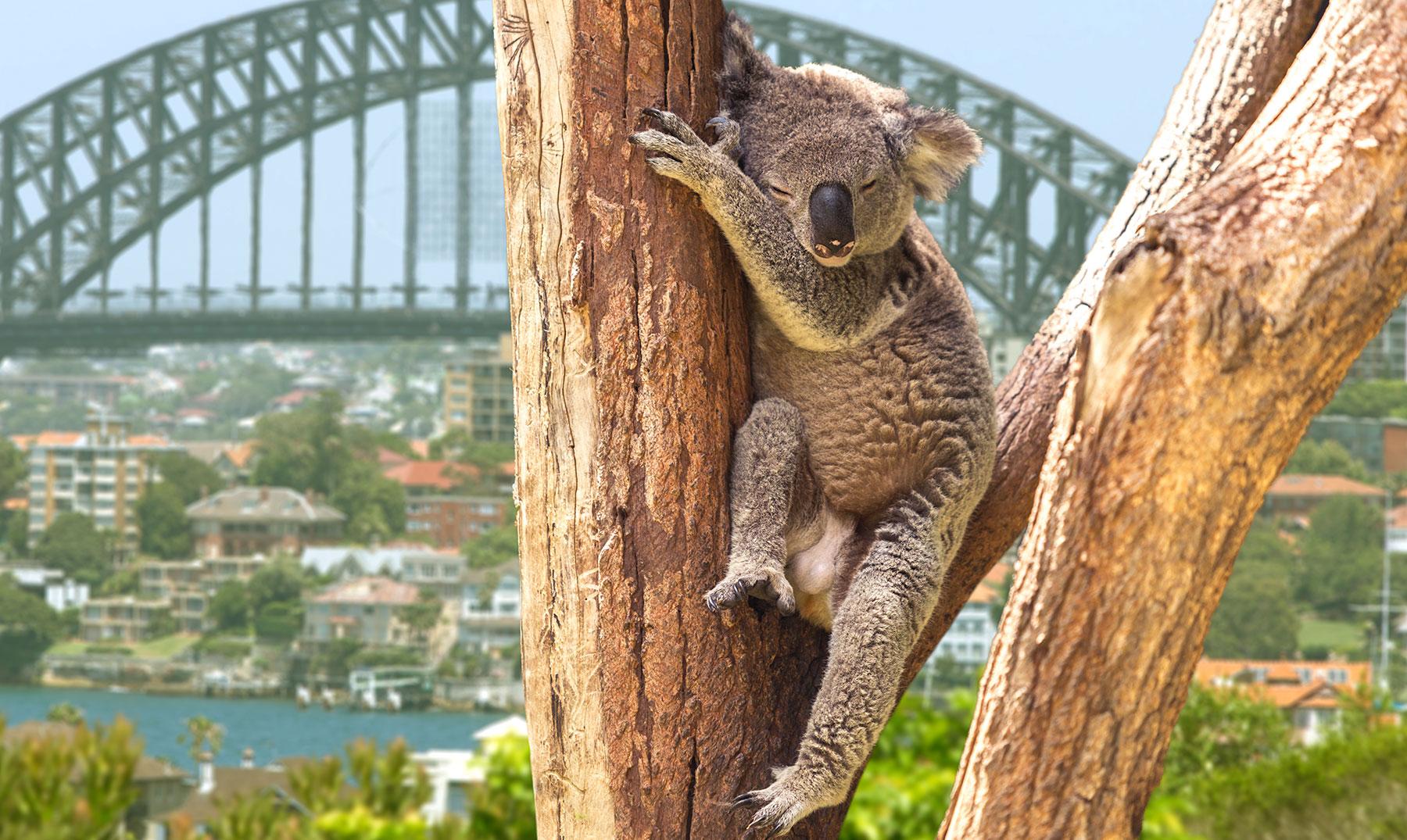 Gana una beca para Australia con GrowPro Experience