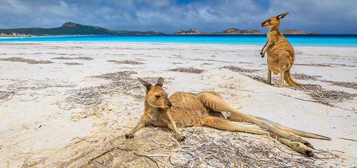 Cape Le Grand National Park   Explora sus playas visitadas por canguros