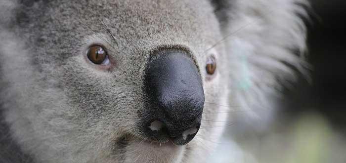 Por qué la fauna australiana es única