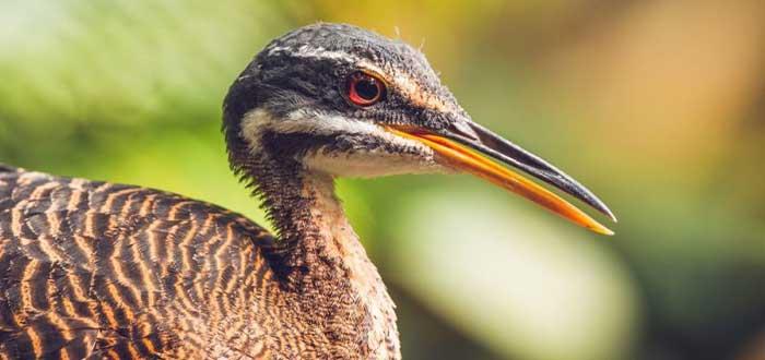 Otras aves de la fauna australiana