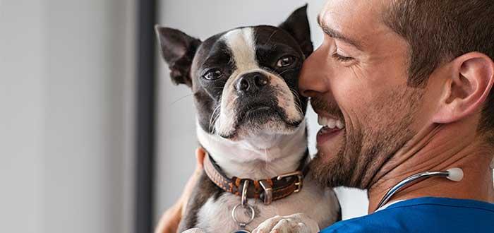 viajar-con-mascotas-llevalo-al-veterinario