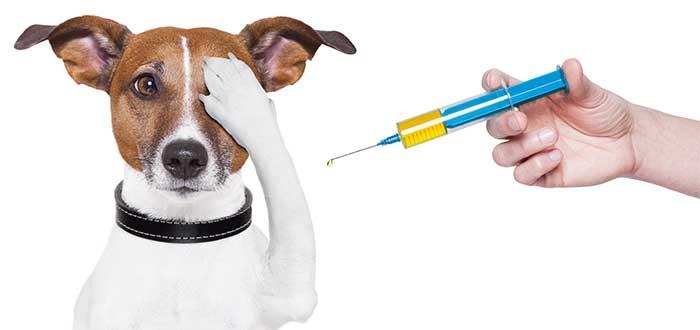 viajar-con-mascotas-vacunalo