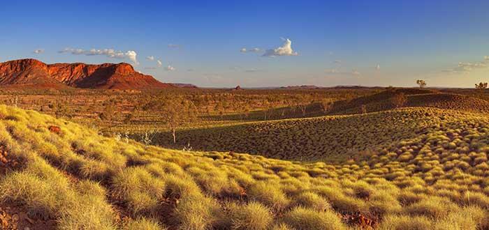 Flora y fauna en el desierto de Australia