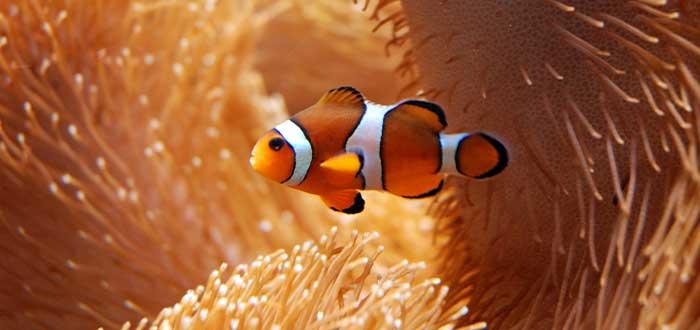 Peces en la flora y fauna de Australia