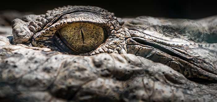 Reptiles en la flora y fauna de Australia
