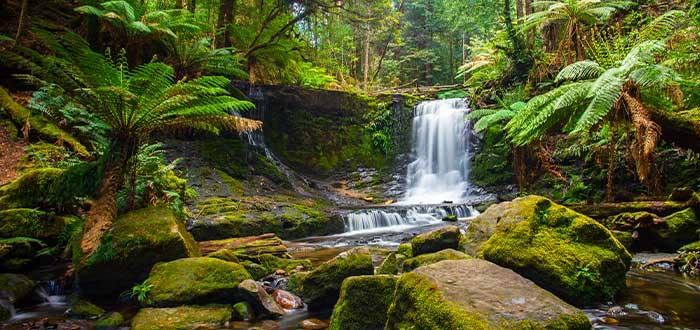 Bosques tropicales en Australia