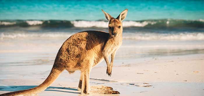 Trabajos-en-australia