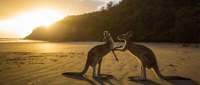 Las mejores playas de Australia: Lucky Bay