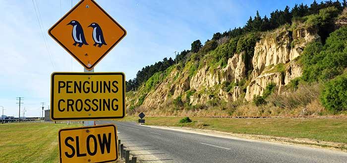 Que ver en Nueva Zelanda, Oamaru