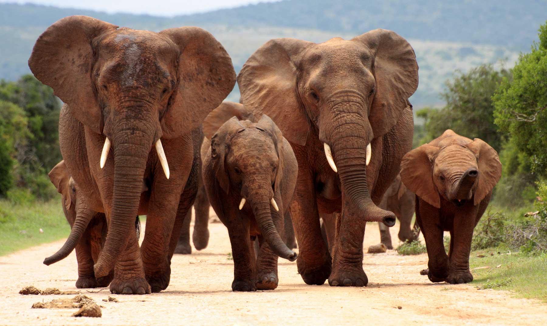 Parque nacional Kruger   Naturaleza en estado puro
