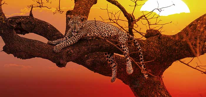 Parque nacional Kruger, animales