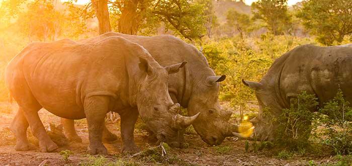 Parque nacional Kruger, fauna