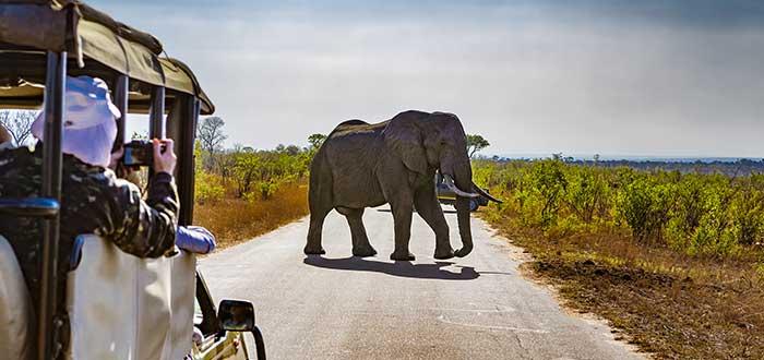 Parque nacional Kruger, opciones de safaris
