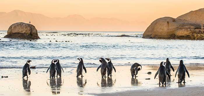 Que ver en Ciudad del Cabo, Playa de Boulders