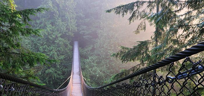 Que ver en Vancouver, Parque del Cañón Lynn
