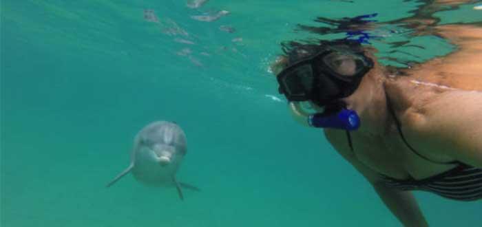 delfin jorobado australiano