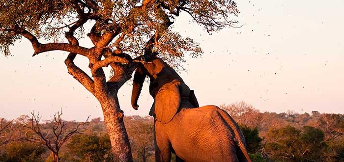 Curiosidades de Sudáfrica 4