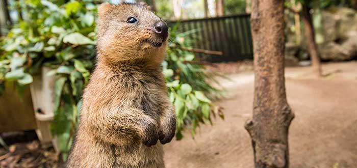 Que ver en Gold Coast, Currumbin Wildlife Sanctuary