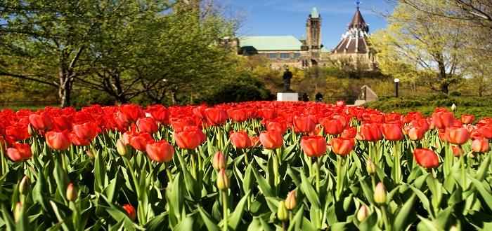 Que ver en Ottawa Majors Hill park