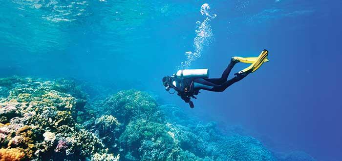 Fauna marina en Australia