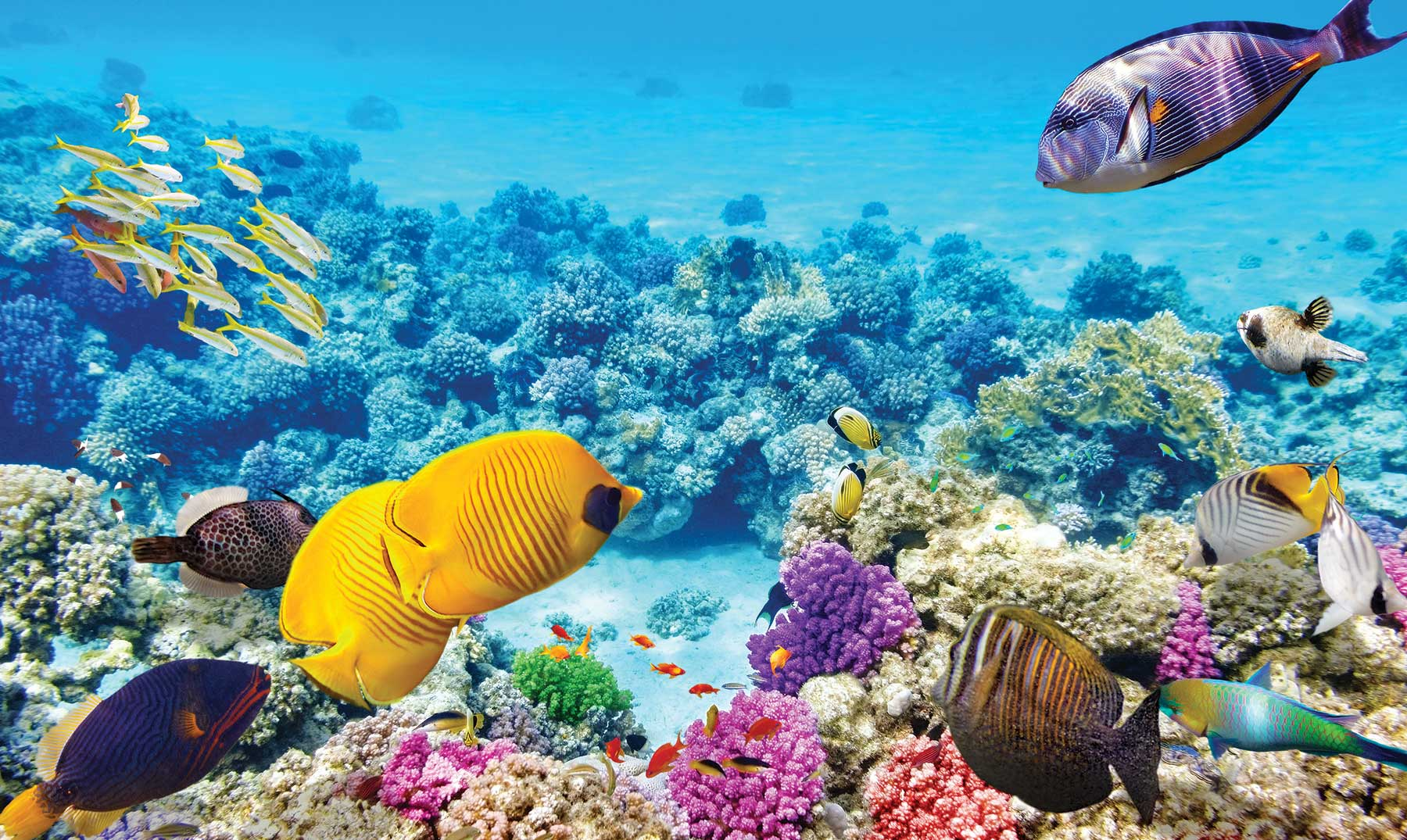 La Gran barrera de Coral de Australia | Paraíso de buceadores