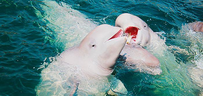parque-marino-beluga