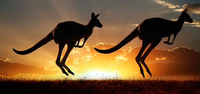Canguro-Australiano-1