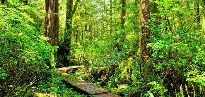 Actividades en el Parque Nacional Pacific Rim