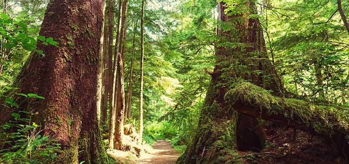 Entrada al Parque Nacional Pacific Rim