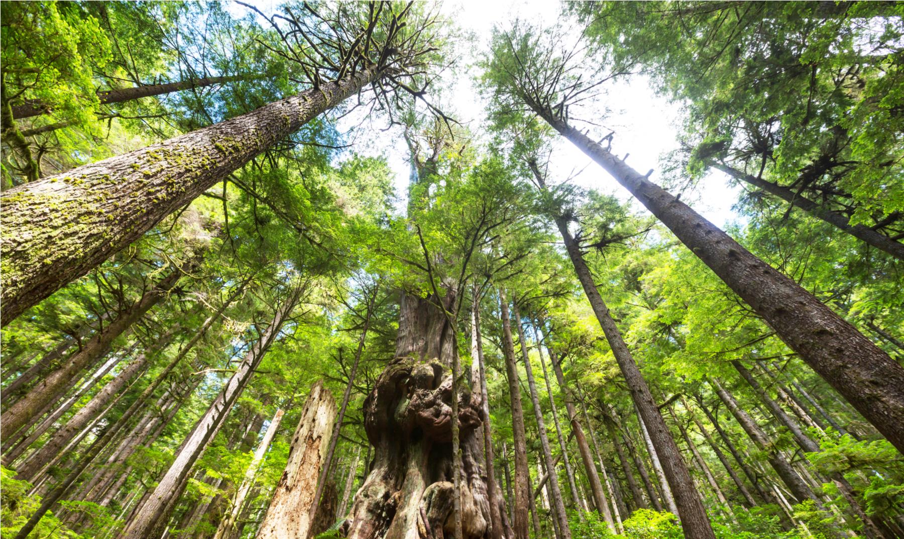 Parque Nacional Pacific Rim - Canadá