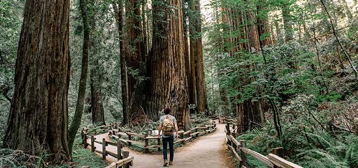 Que ver en San Francisco Monumento Nacional Muir Woods