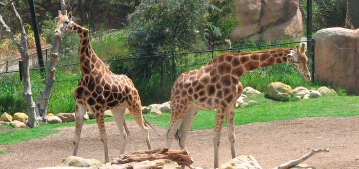 Que ver en Santa Barbara Zoo