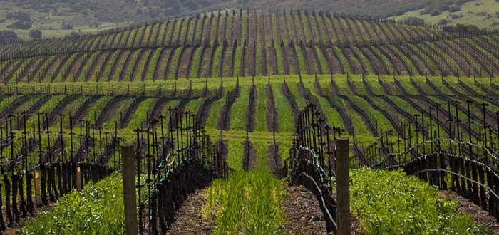 Que ver en Santa Barbara Santa Ynez Valley Wine Country
