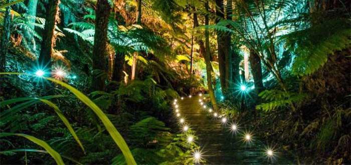 Que ver en Canberra Jardin Botanico de Australia