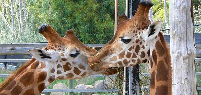 Que ver en Canberra Zoologico y acuario Nacional