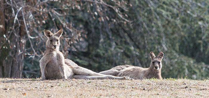 Qué ver en Canberra | Parque Weston