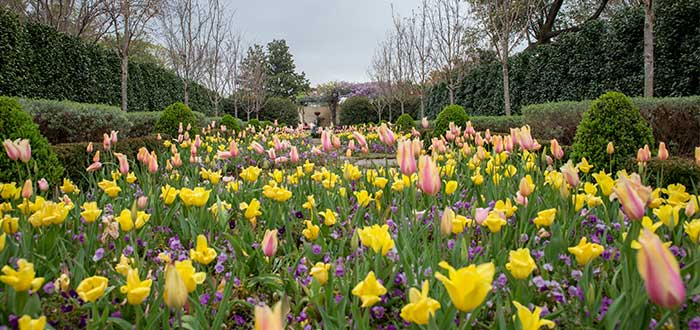 Que ver en Dallas Arboreto y jardin botanico