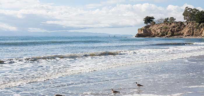 Que ver en Santa Barbara Playa Leadbetter