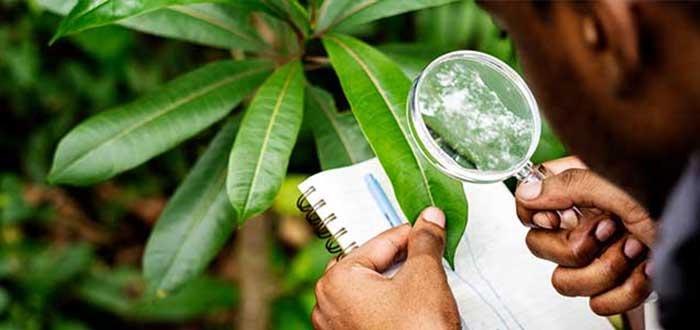 Biología | Carreras universitarias relacionadas con el medio ambiente