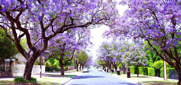 Dónde vivir en Adelaide