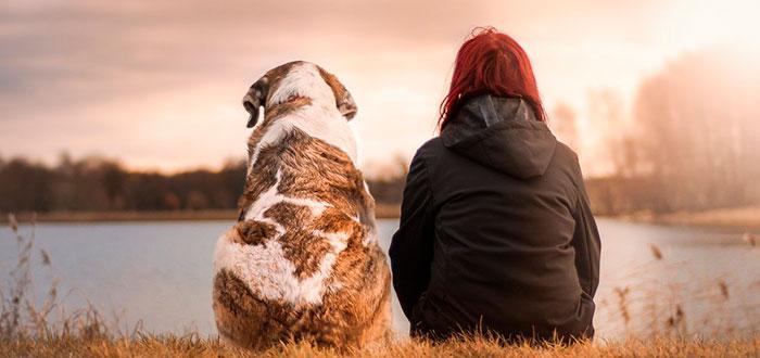viajar-con-mascotas-al-extranjero