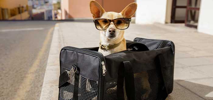 Cómo llevar a mi perro o gato a España