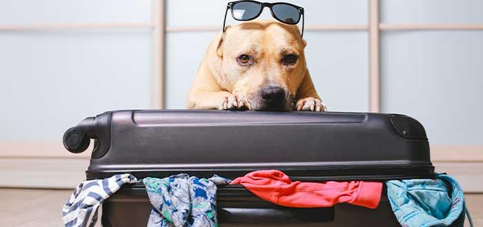 Requisitos para viajar a España con mascotas