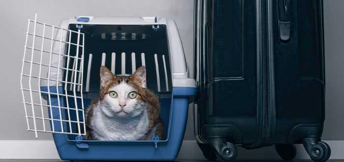 Registra a tu mascota como equipaje de mano o carga para ir al país ibérico